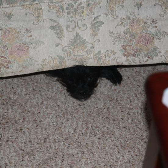 Trudy Hiding