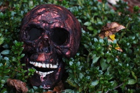 _blog_SkullBush