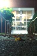leaftime