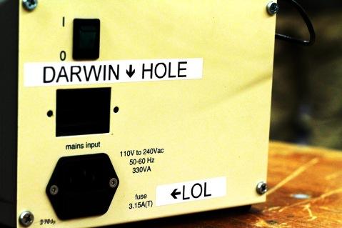 WP_Darwin